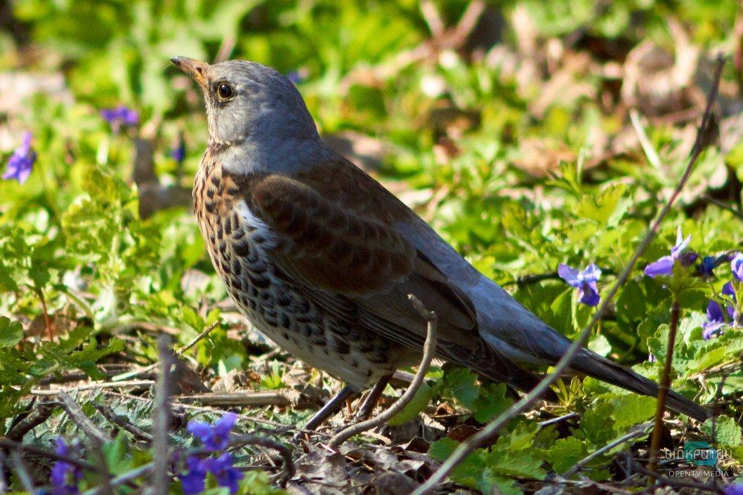 В парке Глобы птицы ищут чем поживиться