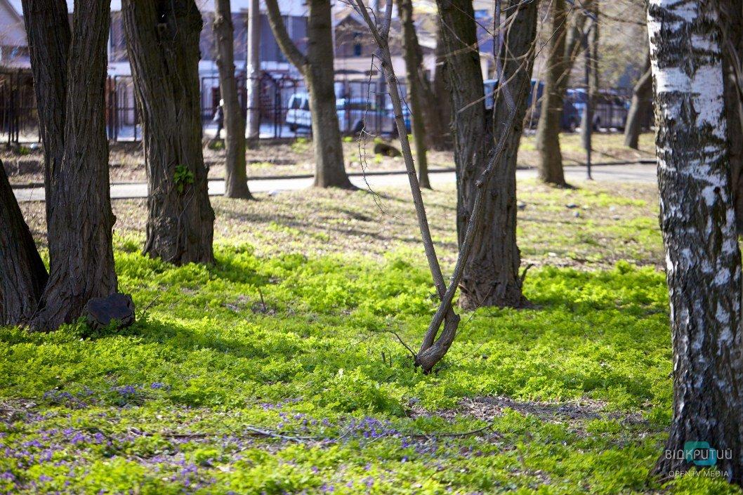 Буйство красок весны поражает и очаровывает
