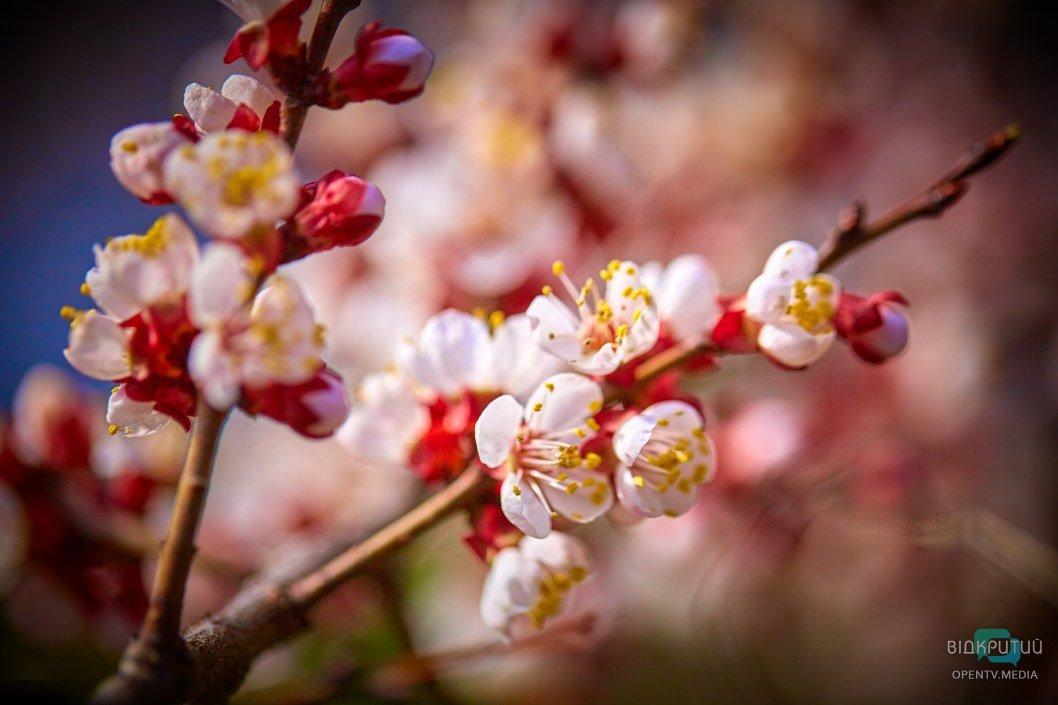 Великолепные оттенки весны
