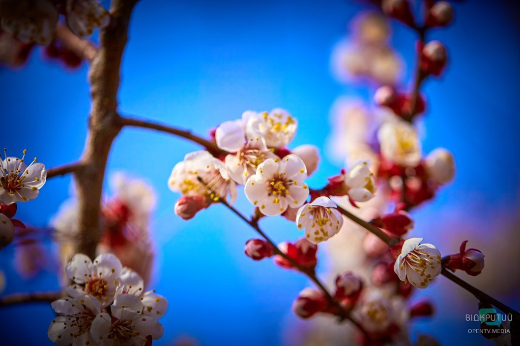 В такие моменты особенно хочется прикоснуться к цветениям