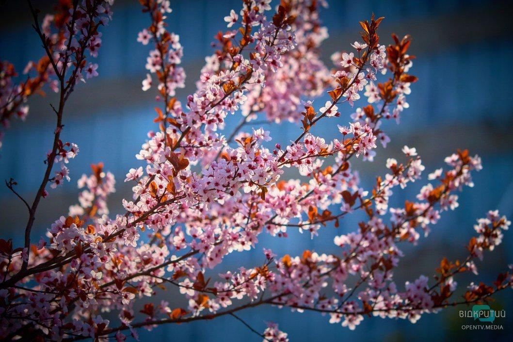 Так и хочется окунуться с головой в ароматы весенних цветений