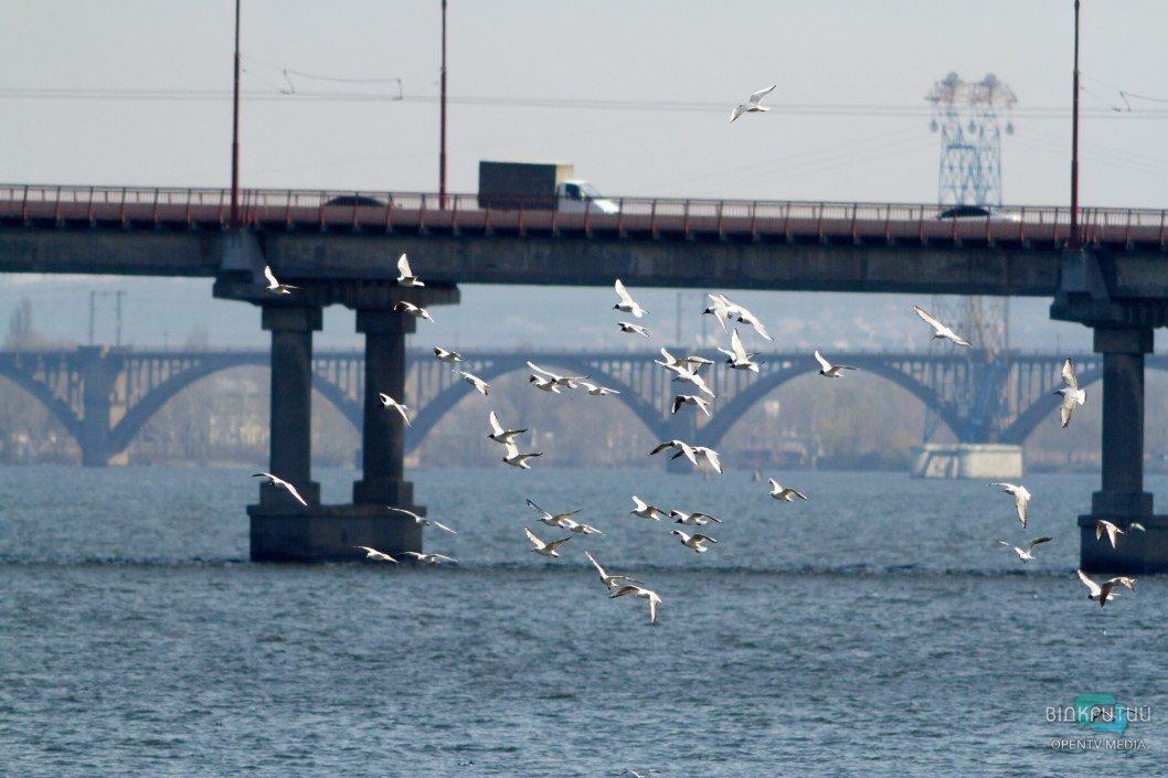 Птицы наслаждаются потоками теплого воздуха