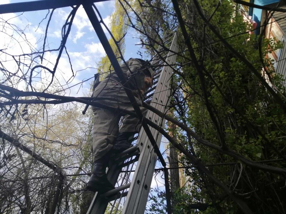 Под Днепром спасатели помогли спуститься «рыжику» с дерева