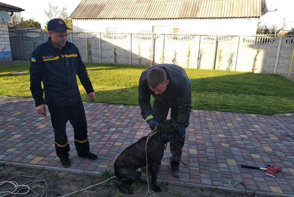 Под Днепром пес провалился в 12-метровый колодец