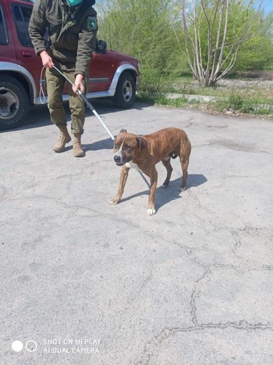 История до слез: в Днепре мужчина нашел своего пса спустя 8 месяцев поисков