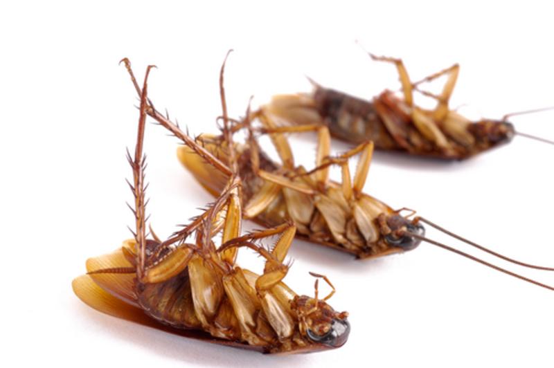 Как избавиться от тараканов