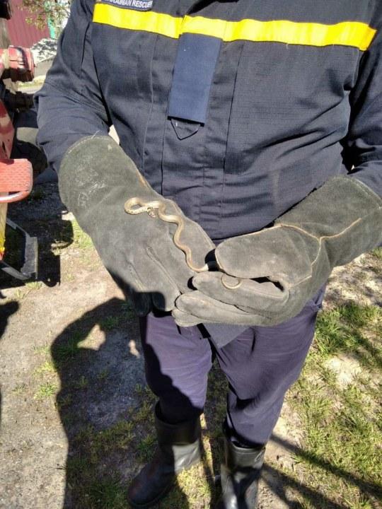 Испугала хозяйку: Под Днепром змея заползла в жилой дом