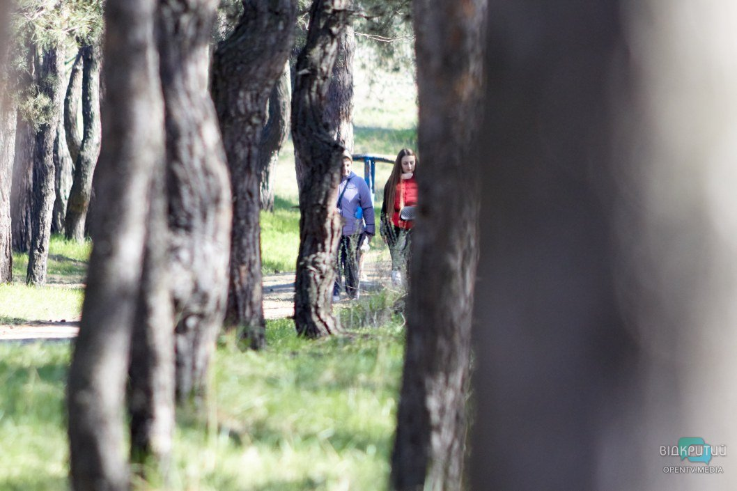 Прогулки по сосновому лесу