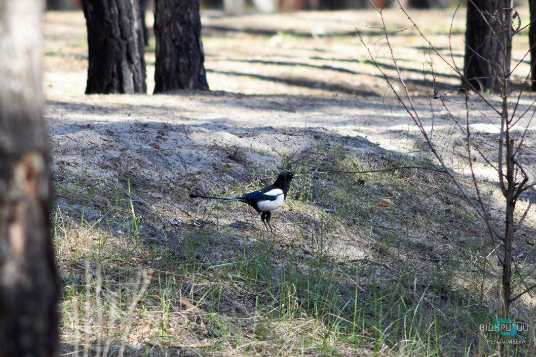 В сосновом лесу на Северном много различных птиц