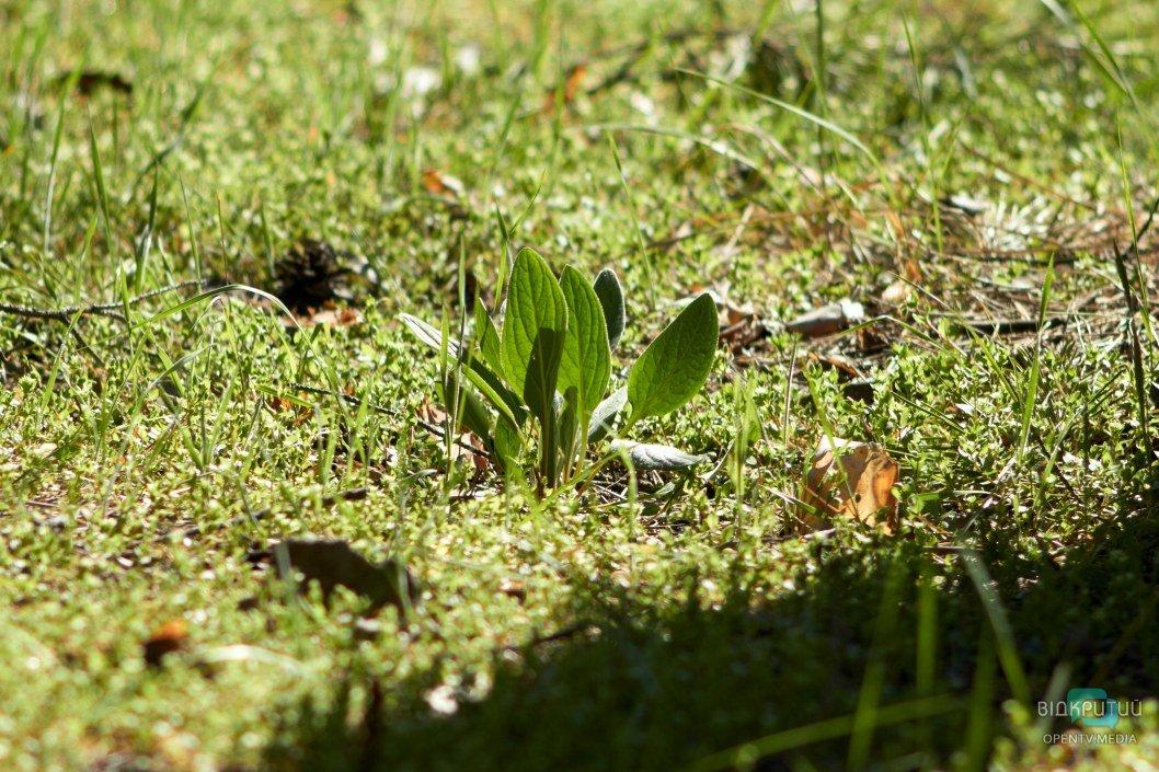 Растения купаются в солнечных лучах