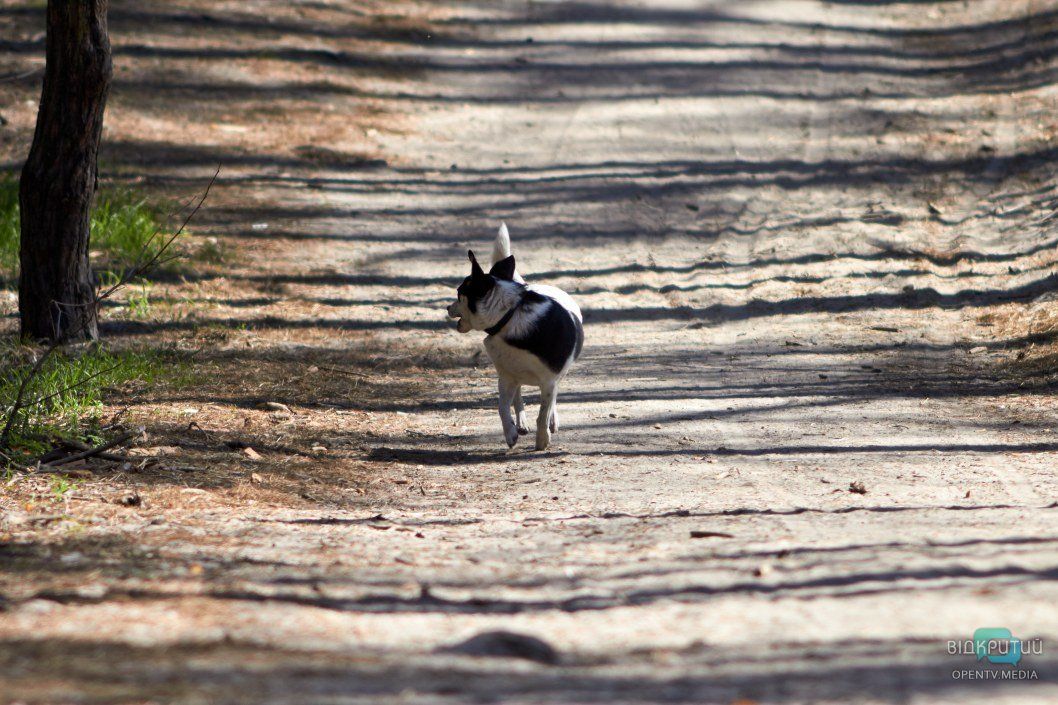Прогулки с питомцами вне запрета