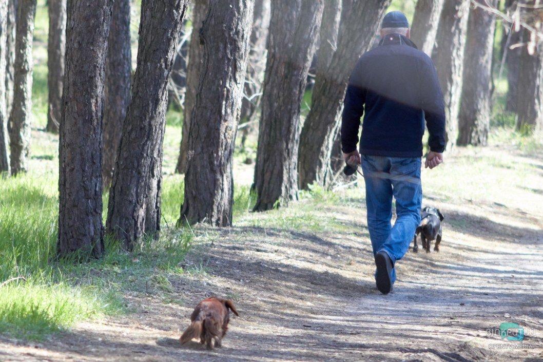 Прогулки с животными – законная возможность посещать парки