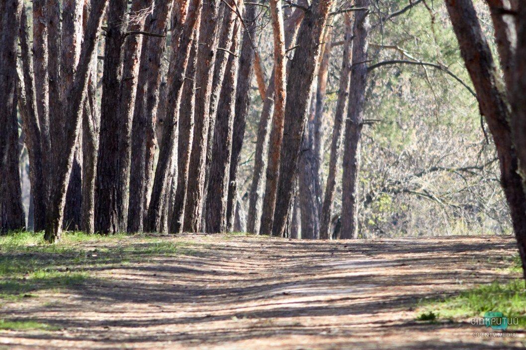 Настоящий сосновый лес, где вместо гула машин слышны серенады птиц