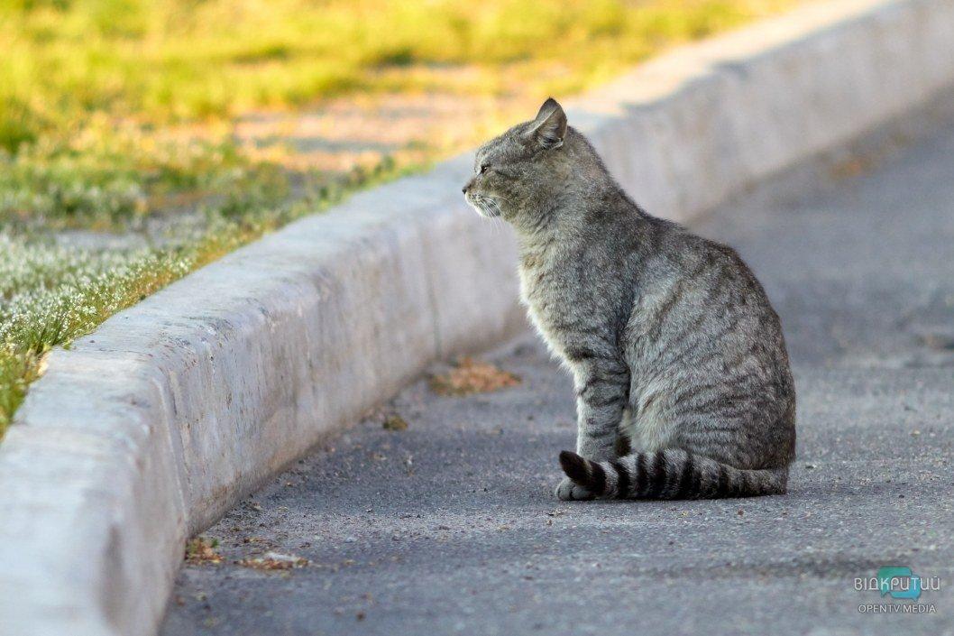 В Приднепровске мужчина попал в ДТП из-за кота (ФОТО)
