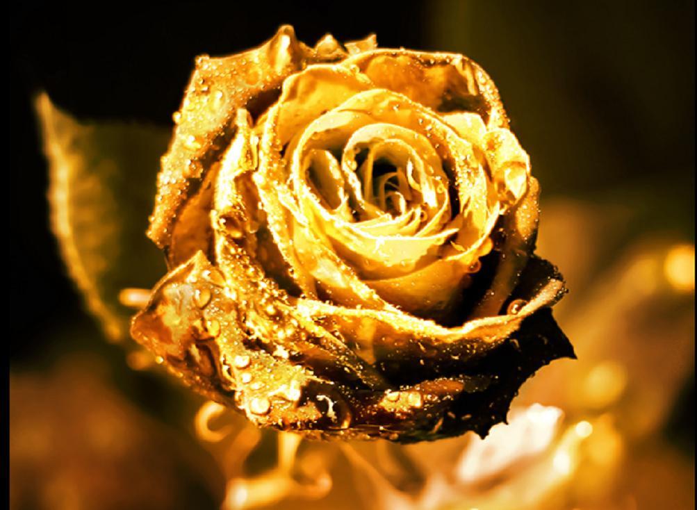 zolotaja roza simvol