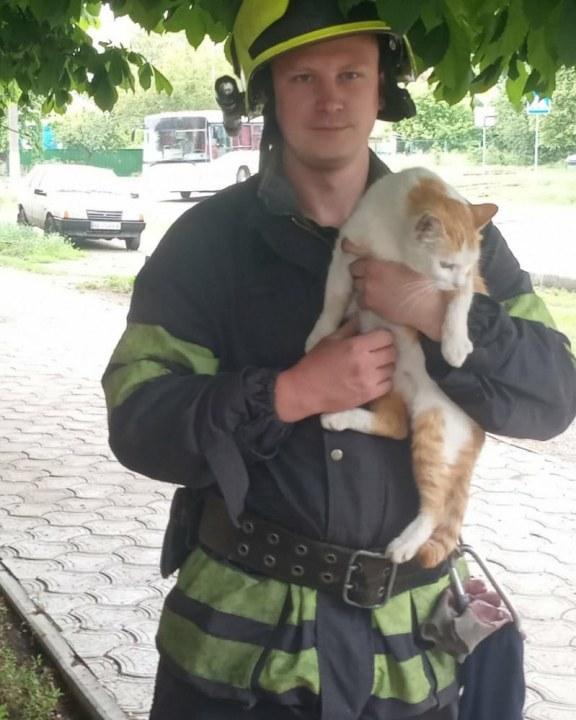 Сняли котика с дерева Синельниково