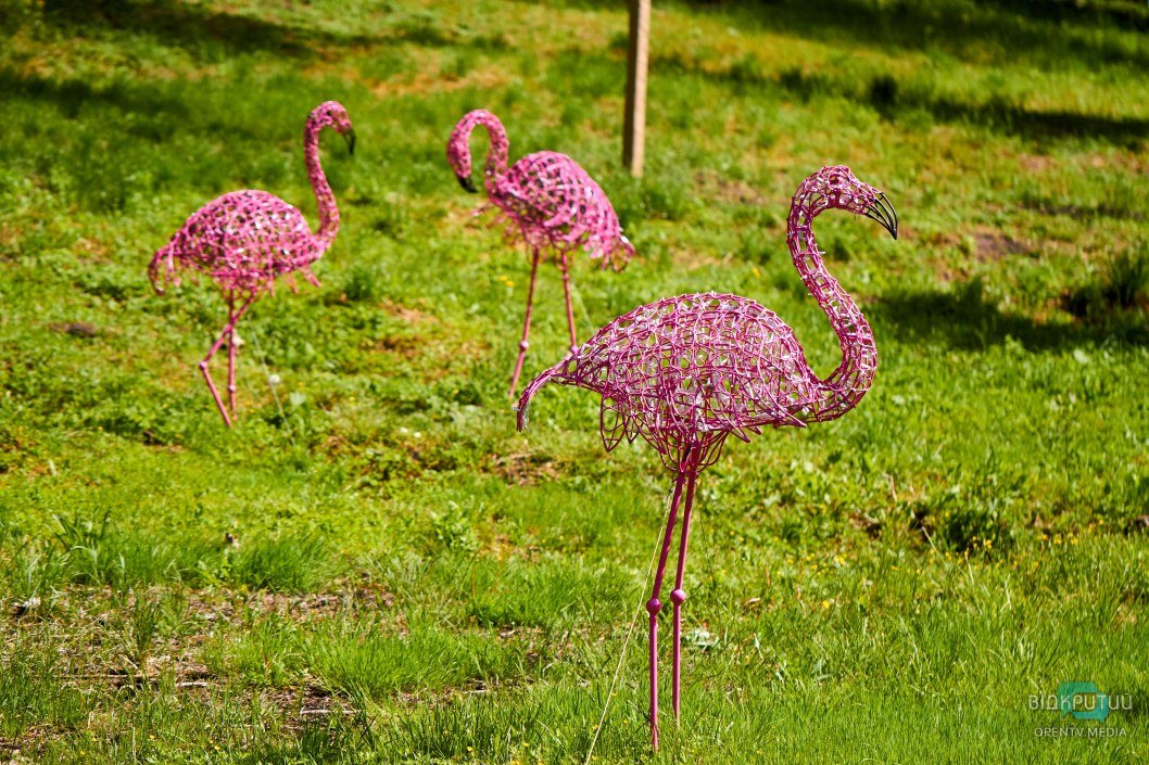 Подвесные качели и розовые фламинго: как сейчас выглядит парк Зеленый гай в Днепре (ФОТОРЕПОРТАЖ)