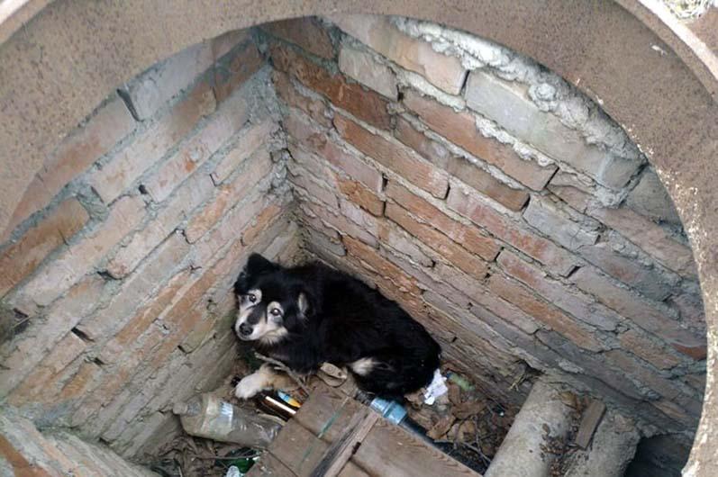 Спасатели помогли псу, который упал в колодец