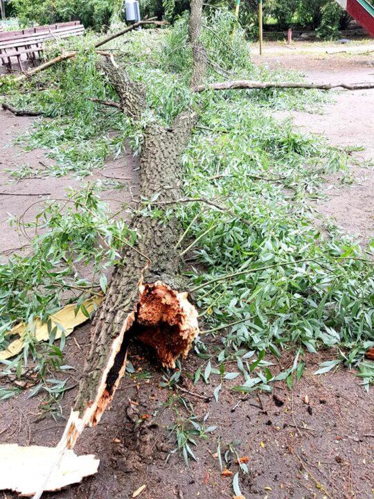 Упало дерево Днепр