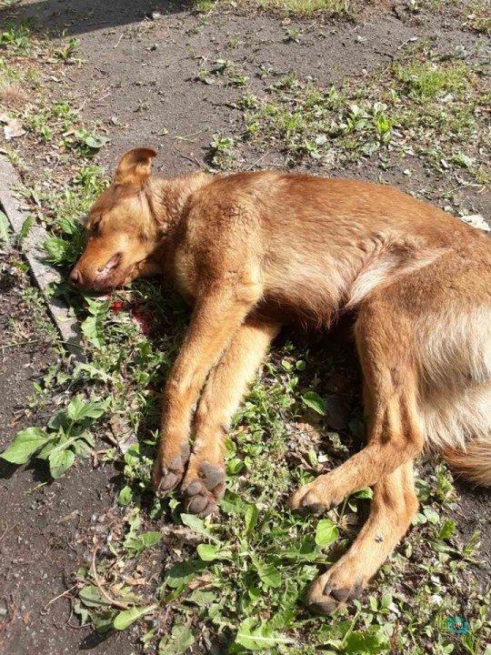 В Днепре водитель сбил собаку и оставил ее умирать (ФОТО 18+)