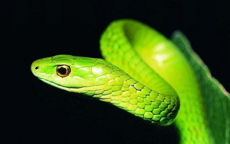 Факир был пьян: в Днепре мужчина выгуливал змею во дворе жилого дома