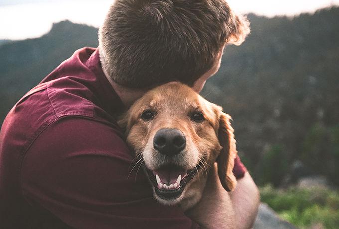 Жестяной плен: в Днепре спасли собаку, пострадавшую от консервной банки (ФОТО, ВИДЕО)