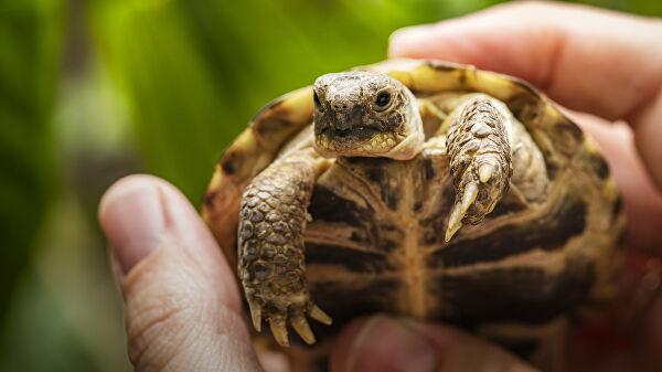 Под Днепром из-за пожара погибло множество черепах (ФОТО)