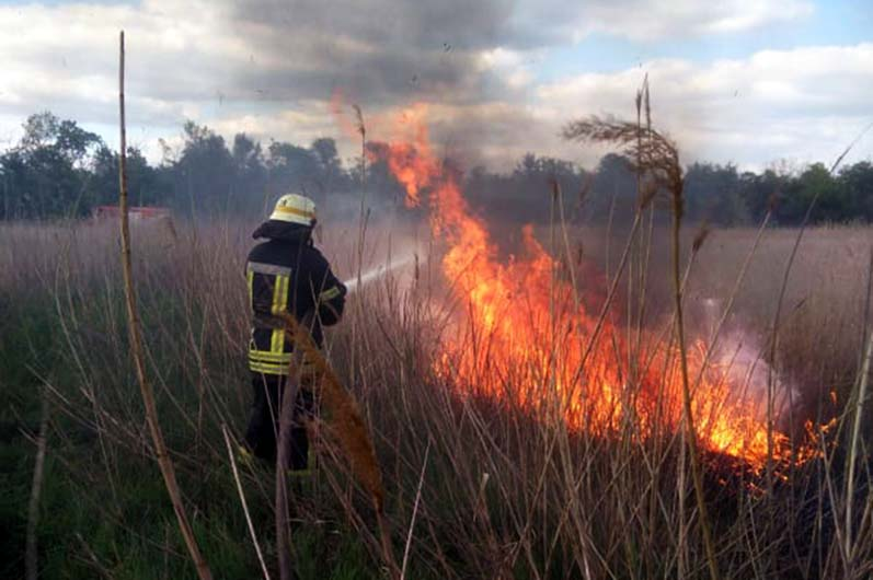 На Днепропетровщине спасатели больше 5 часов тушили масштабный пожар