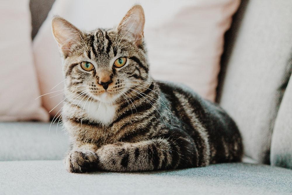 Спасли пушистика: в Днепре помогли котику, застрявшему между стенами гаража (ФОТО)