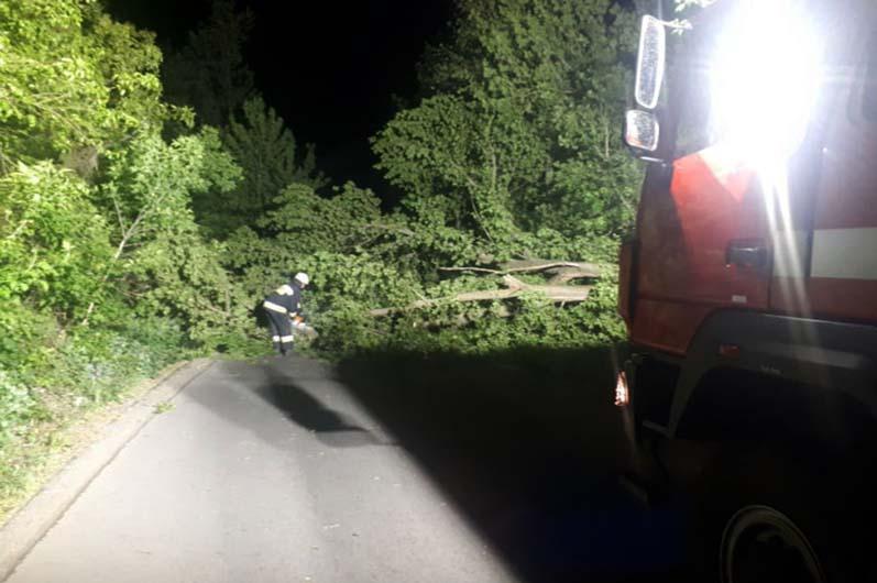 Было страшно: в Днепре ночью падали деревья (ВИДЕО)