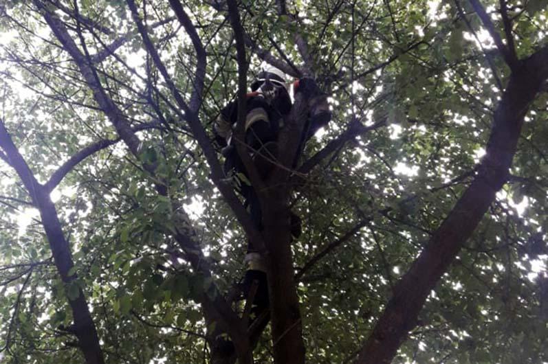 В Днепре спасатели помогли пушистику спуститься с дерева