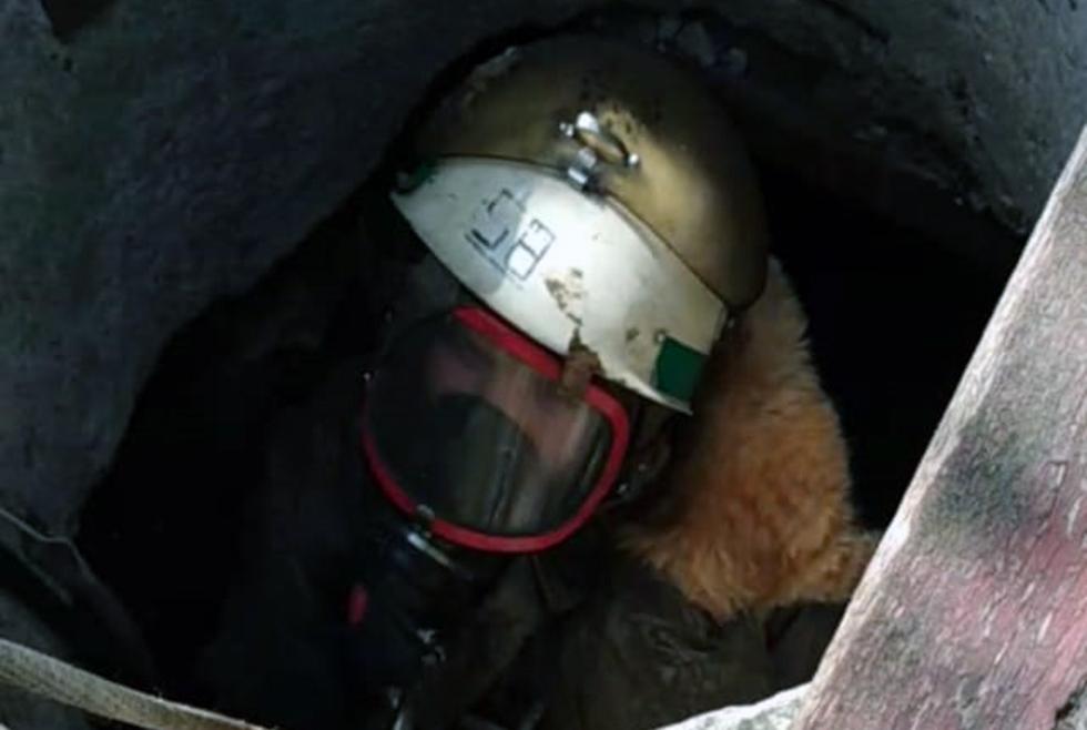 Под Днепром кошка упала в колодец с водой (ФОТО)