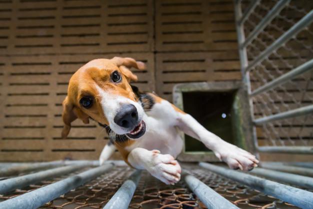 Мэри Догинс: как талантливые собаки из Днепра танцуют в поддержку медработников (ВИДЕО)