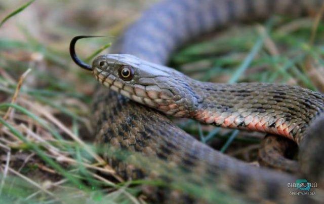 Смотрите под ноги: в Днепре змеи на Фестивальном причале