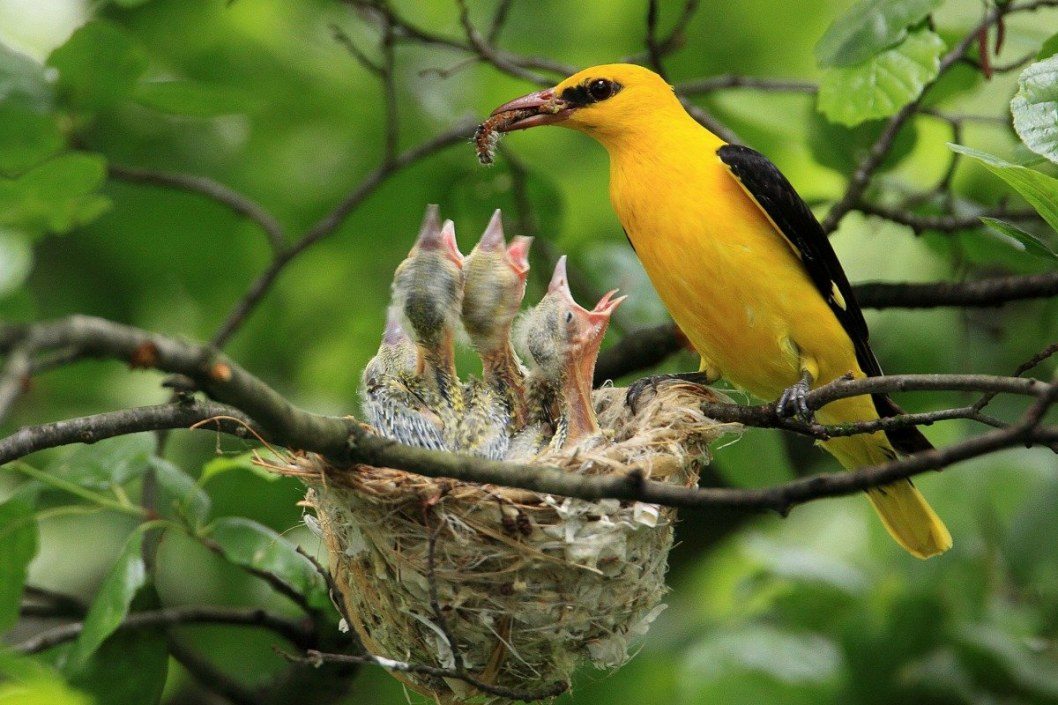 Жёлтое тельце и красный клюв: в Днепре заметили необычную птичку (ФОТО)