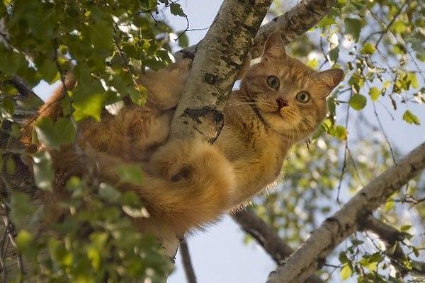 Вернули домой: в Днепре спасли котика, который застрял на дереве (ФОТО)