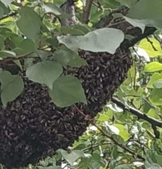 В Днепре спасатели достали пчелиный улей, который появился возле жилого дома