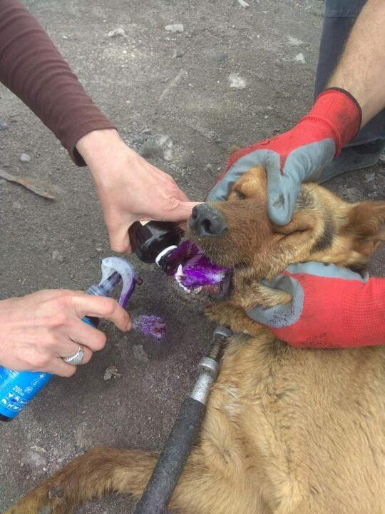 Помогли собаке Днепр