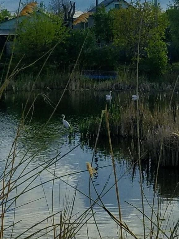 В Днепре на Левобережном-3 заметили удивительных птиц