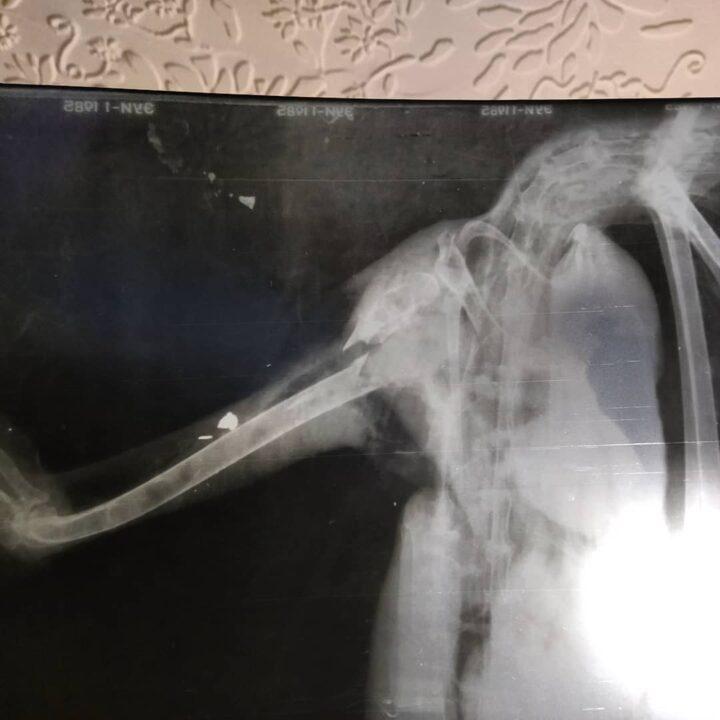 В Днепре волонтеры спасают цаплю: неизвестные подстрелили птицу