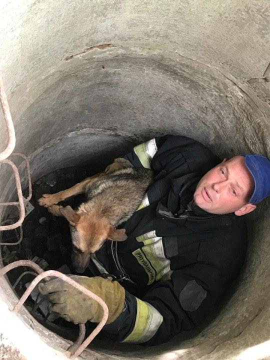 В Днепре на Тополе пёс упал в 4-метровый люк (ФОТО)