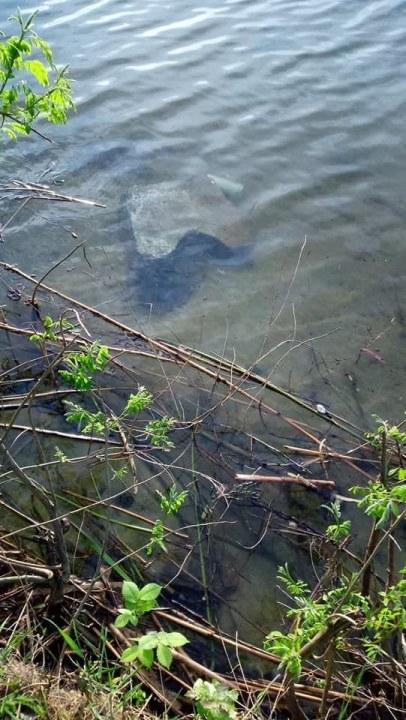 В Днепре на косе вандалы разломали лавочки и выбросили их в речку