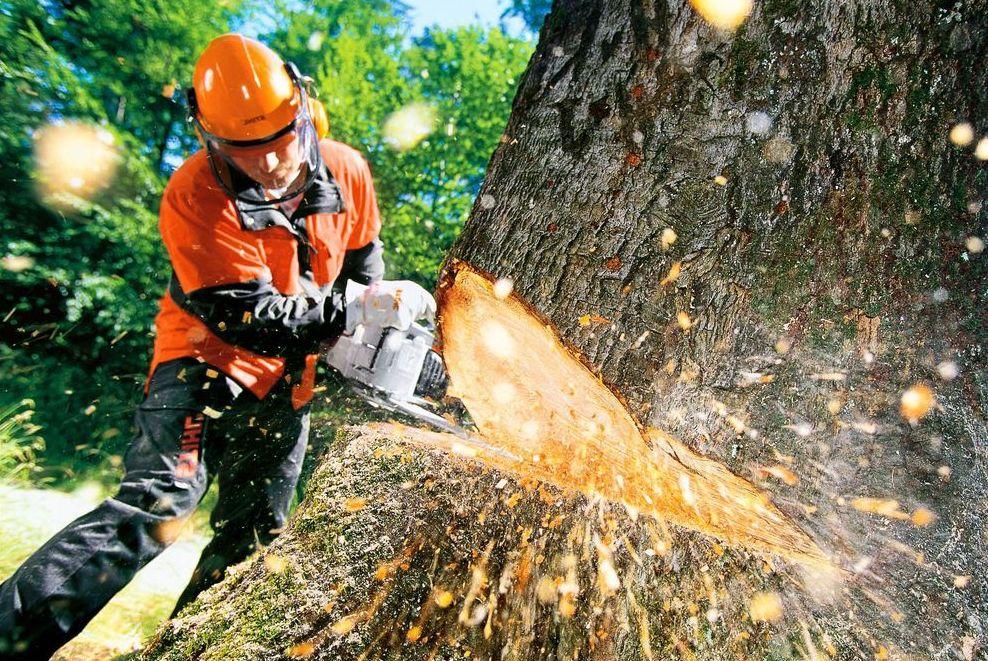 В Днепре городская власть планирует снести 400 деревьев