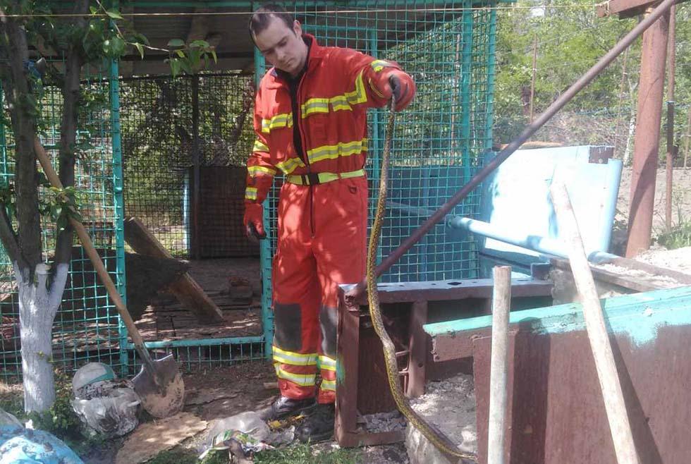Внезапная гостья: в Днепре во двор частного дома заползла змея (ФОТО)