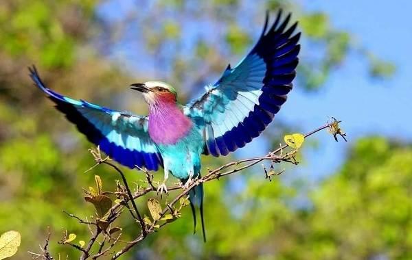 Синяя птица удачи: в Днепре заметили сизоворонку (ФОТО)