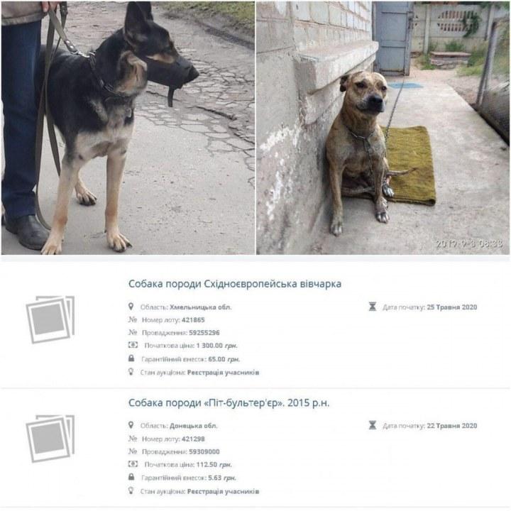 В Украине конфискуют животных у хозяев за долги и продают на аукционах