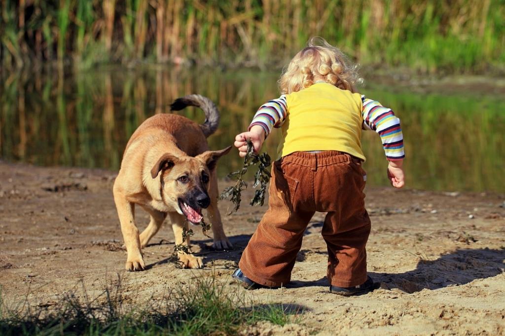 Дети против собак: в Днепре не поделили специальную площадку (ФОТО)