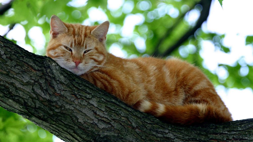 Рыжий верхолаз: под Днепром спасатели помогли котику спуститься с дерева (ФОТО)