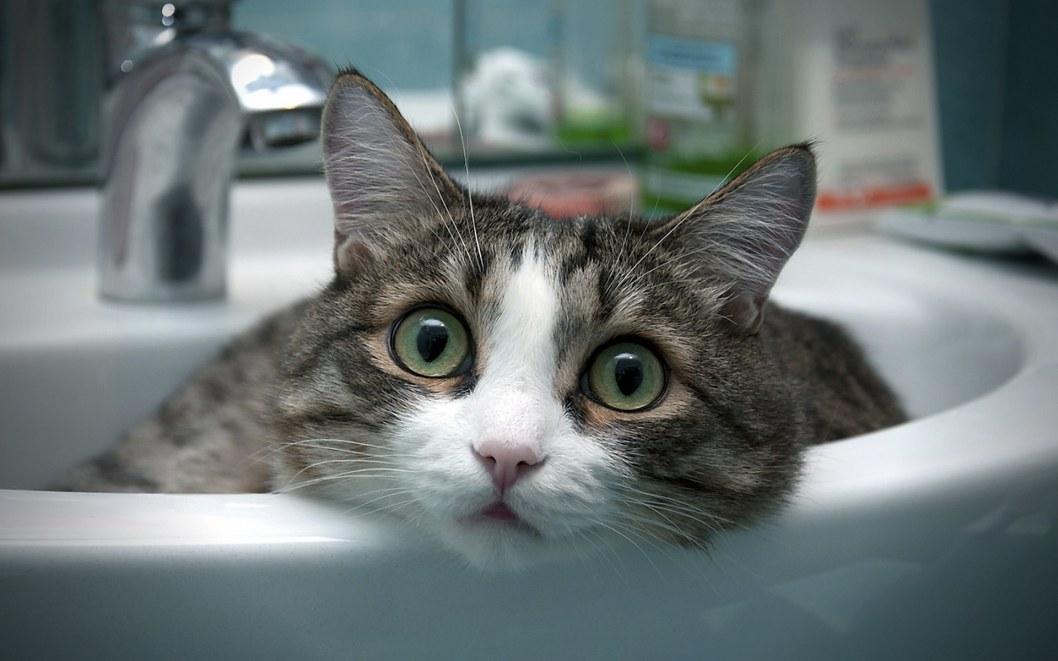 Котик в раковине