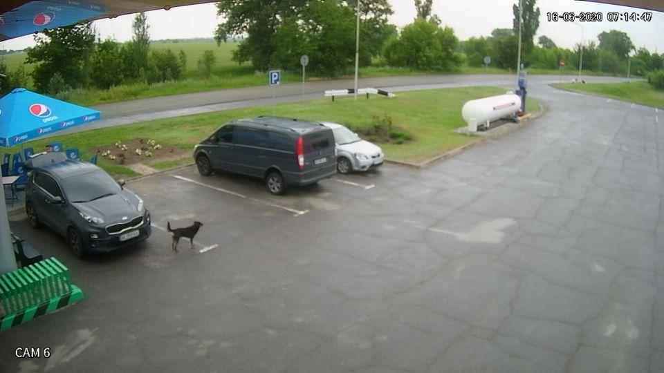 Всё в дом, всё в семью: в Таромском водитель иномарки украл стул с заправки (ФОТО)